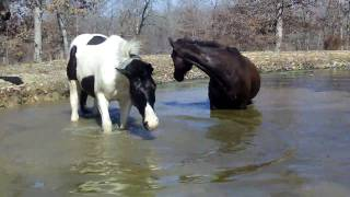 Tamingo and Tex