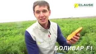 Обзор новинки моркови БОЛИВАР F1, CLAUSE