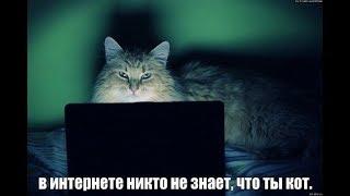 Кошка смотрит видео - забавные кошки и котята мяуканье.