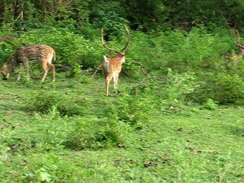 Nilgiri Biosphere Reserve -- Bandipur National Park, 15.5.10