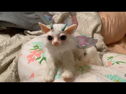 What a cute fairy kitty cat!
