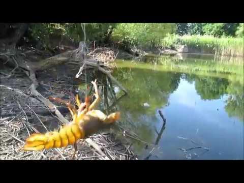 Ловля раков и рыбы на удочку