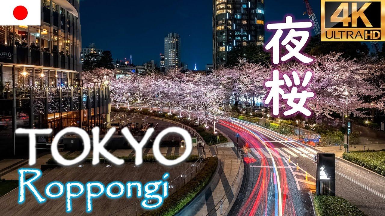 【夜桜 SAKURA】Tokyo Midtown Roppongi Hills🌸東京ミッドタウン六本木ヒルズ