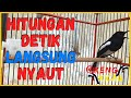 Pancingan Kacer Gacor Paling Jitu Djamin Hitungan Detik Langsung Nyaut Gacor  Mp3 - Mp4 Download