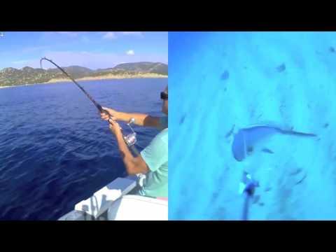 waterwolf underwater HD -Ricciola scippa calamaro ai pesci Balestra