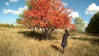 Осень за городом | Прогулка на природе