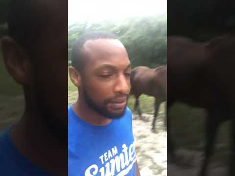 Bill Handel - Meet Travis And His Singing Donkey Nathan