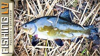 Ловля ЛИНЯ в марте на фидер и донку, проверка клёва линя | Tench Fishing | Līņi cope pavasarī