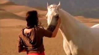 arabian horse association tv ad