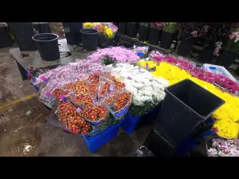 Sydney Flemington Market- Best Flowers At Cheap Prices (Part 1)- 4K