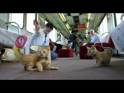 Passengers enjoy Japan's first cat cafe on a moving train