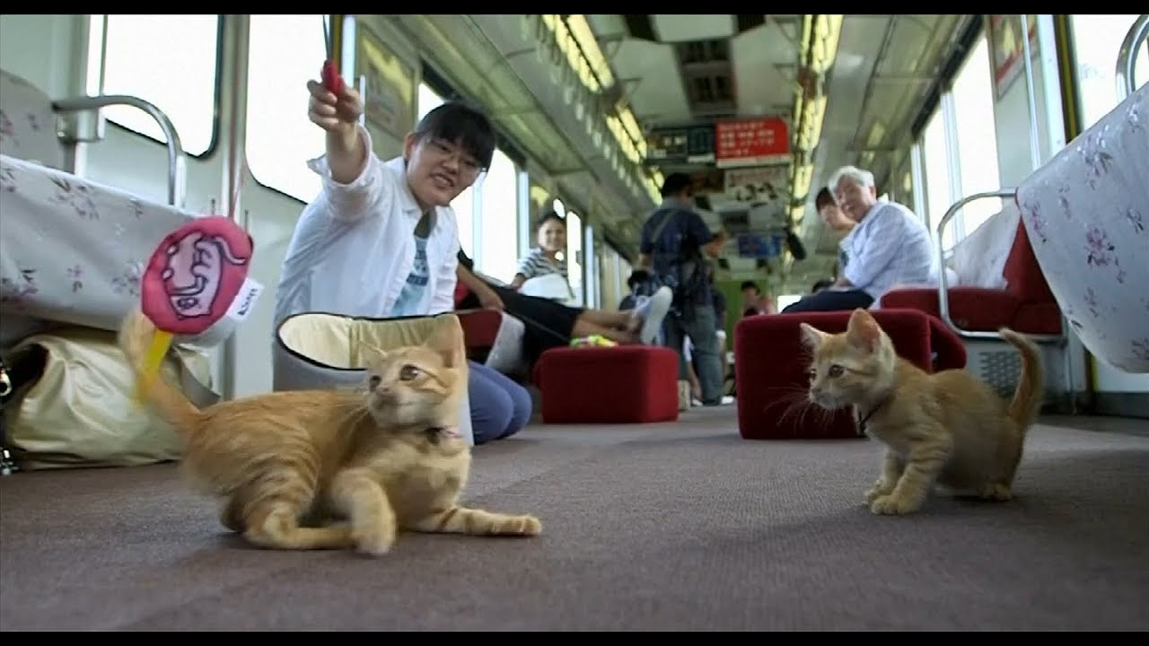 The Cat Cafe Train