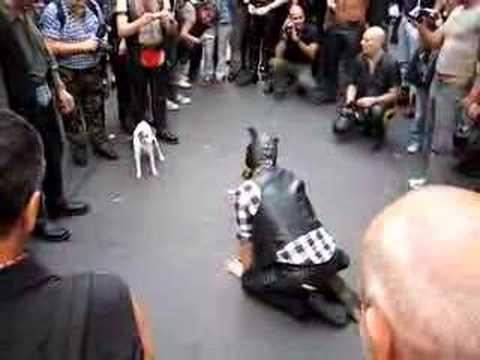 Confused Dog  - Folsom Berlin 2006