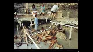 Unglaublich grösste menschliche Skelette der Welt