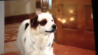 Прикол из собака точка ком
