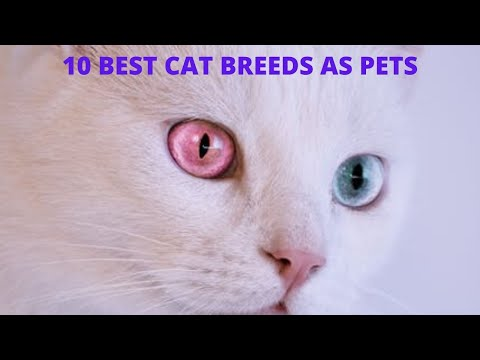 CATS_10 BEST BREEDS AS PETS