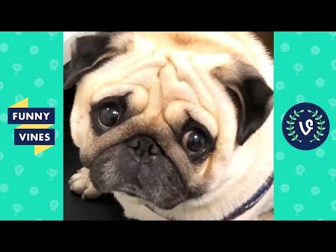TRY NOT TO LAUGH – Funny Animals that will cure your sadness!