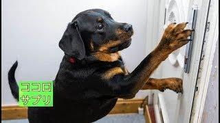チャンネル登録はこちら→https://goo.gl/cUgUX4 飼い主が健康問題で非常...