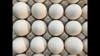 अंडे ब्रायलर का थोक रेट !   Murga mandi rates   Egg rates  Indian Poultry ! 21-6-2017