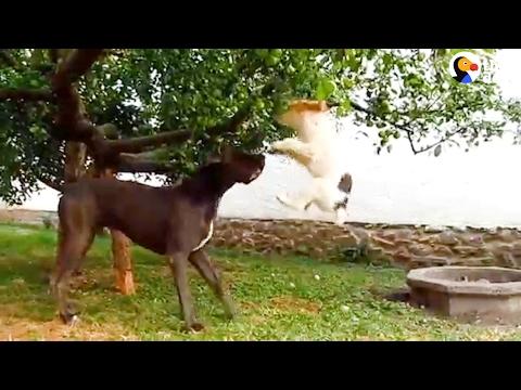Big Dog Helps Little Dog Pick Apple
