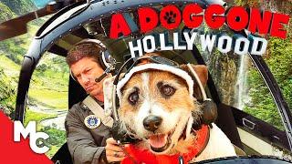 A Doggone Hollywood | 2017 Family Adventure