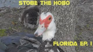 STOBE THE HOBO 31-FLORIDA#1-JAX, SARASOTA, ETC