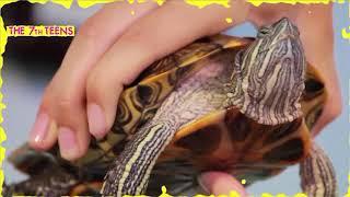 Как ухаживать за черепахами в домашних условиях?||The7thTeens