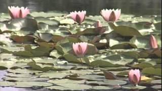 видео Плавательный бассейн для пейзажного сада