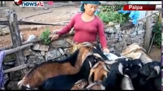 पाल्पाको तिनाँउ गाउँपालिकाको मस्याम गाउँका किसानहरु बाख्रापालनतर्फ – NEWS24 TV