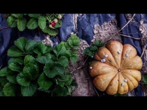 Agroforesterie : l'exemple de la ferme de la Durette