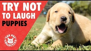 Try Not To Laugh | Funny Puppies Compilation 2017