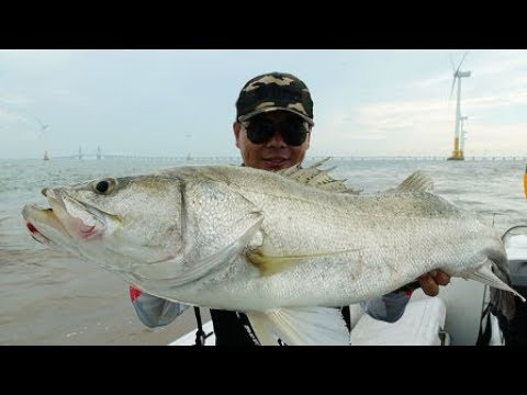 Catch Amazing Sea Bass at East China Sea nearby ShangHai China