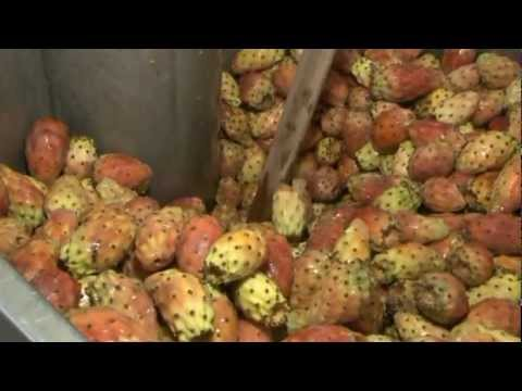 extraction huile de p pins de figue de barbarie youtube