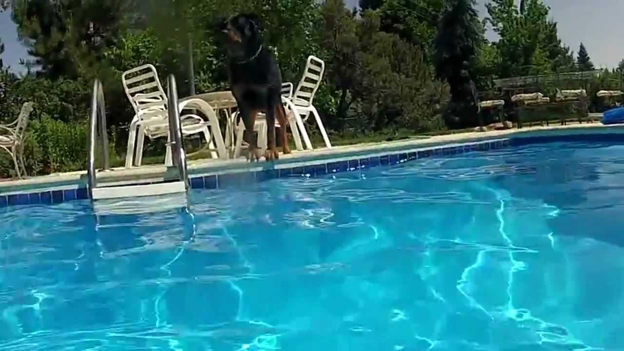 Разрезал бассейн видео