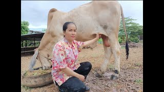 How To Care Of a Cow Feed Ingredients In My Village