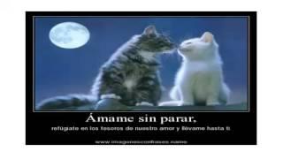 Play No Se Tu (Luis Miguel)