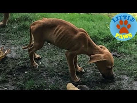 Rescue a Homeless Starving Puppy & In Severly Malnourished