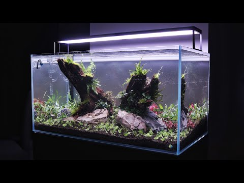 how-to-aquascape---step-by-step-nature-aquarium