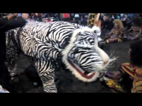 Leak macan putih perform brojonalan borobudur