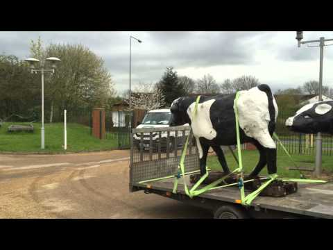 MK's famous concrete cows arrive back home at the place of their birth - Milton Keynes Museum
