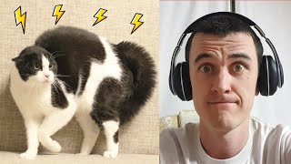 Why is the cat afraid of dad with the headphones?