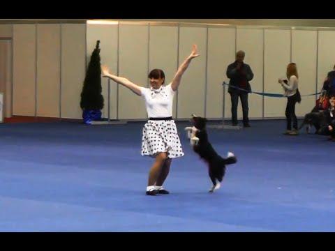 """Танцы с собаками """"Кубок Мастеров 2013"""". Dog Dancing. Canine Freestyle."""