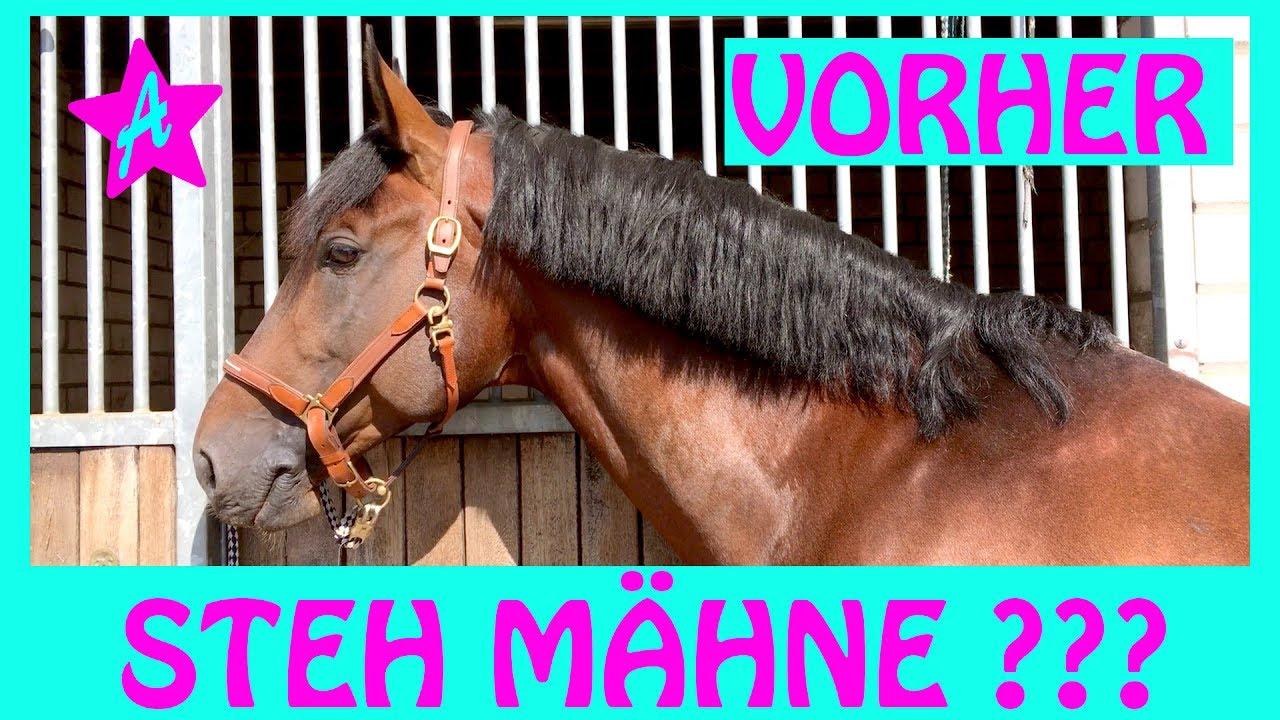 Schnipp Schnapp Mähne Ab I Canto Beim Friseur I Pferd Frisieren