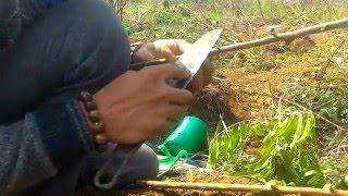 Ghép đào kiểu Nhật Tân