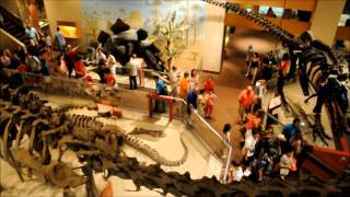National Museum of Natural History (Smithsonian) - Dinosaur Hall