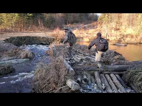 🐦Grouse Hunting Cold Day Catch, Clean,cook, Eat)🍲. Yos Tua Yij🐦 Lub Caij Ntuj No, Ua Noj Qab Heev