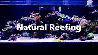 Channel Appetizer | Ep.7 | Natural Reefing's 140g Mixed Reef