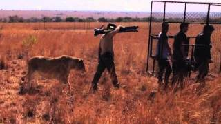 Filming With Kevin Richardson Lion Whisperer | Kevin Richardson South Africa