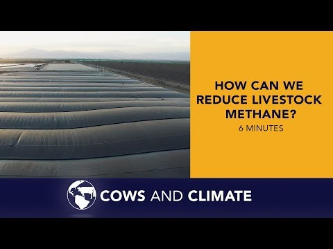 How Can We Reduce Livestock Methane?