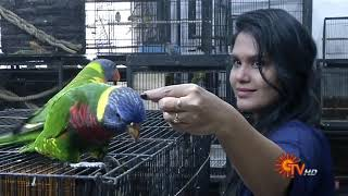 Tamed Pets in Today's Sun News (The First & Only Exotic Pet Shop in Chennai)